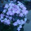 いよいよ本格的な梅雨いりですね。紫陽花に癒されます。!!