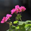 お花(3)