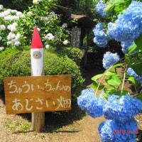 武蔵五日市の「南沢あじさい山」までサイクリング(あきる野市)