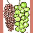 葡萄は年々大粒になり、甘さも増し、種無しも進み、皮ごと食べられる