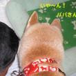 ★ゆずちゃん、おめでとう〜★