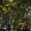 「林の中の輝き」 いわき 夏井川渓谷にて撮影! 残り紅葉