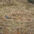 珍しい鳥に、出会いました。