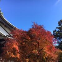 2018年11月16日  日本某所  羽田空港  鎌倉  葉山