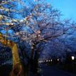 岳温泉の桜にも間に合う