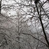 めっちゃ雪。