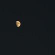夕方の月とカラス