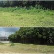 徳島事務所の草刈りと外壁塗装