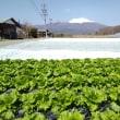 野菜専門委員会野菜販売推進会議