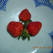 イチゴ 初収穫