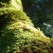 白駒池~苔の森