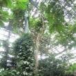 「世界三大花木」