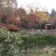 師走の鎌倉;中央公園の紅葉と熱いコーヒーでリフレッシュ