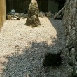 牛鼻神社7