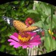 蝶の変態を接写