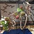 目黒雅叙園 百段階段 生け花最終週「漁礁の間」