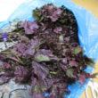 無農薬赤紫蘇 紫蘇ジュース