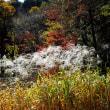 オギ - 石神井公園