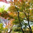 『初冬の寺社』 紅葉