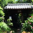 都心の5月の薔薇 (南蔵院編)