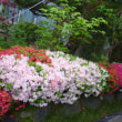 見ごろの花と藤見