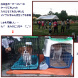 八犬コンペ  2017.08.05