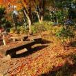 マンションのお庭の紅葉