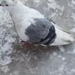 春を待つアウトレイジな鳥たち?