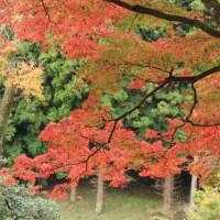 佐久山御殿山公園の紅葉