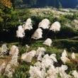 10月26日枝折峠の帰りに松之山天水狐塚の棚田