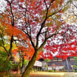 まばゆい紅葉