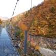 桂湖の紅葉