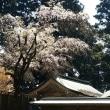 奈良まち散策