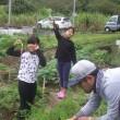 ニンジンの収穫  はいさい農園