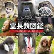 霊長類図鑑 サルを知ることはヒトを知る事   日本モンキーセンター編