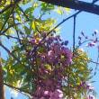 藤の花の香る季節