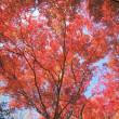 11/16(木)のイキメンニュース~少子化・子育て・教育の情報
