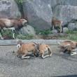 鹿か羊?☆