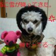 大変~! 東京雪が降ってきたぁ~ ウォー (丿 ̄ο ̄)丿