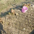 菊菜とカリフラワ-とダイコン