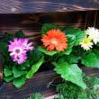 我家の花達とその他 2017年10月 第164号