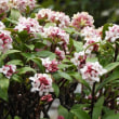庭を彩る花たち