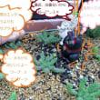 """""""ぶらりなつ 賞金カメの 50まん"""" なにゅうぅ、訳わからん事、書いとるんじゃーと、おもぉとる人も、おるんじゃけどぉ。 違う違う、ほれ、渋川動物公園のあれじゃー。"""