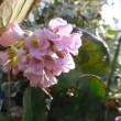 庭にも春の気配が・・・フキノトウ見つけました~