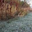 庭の水道も凍りました