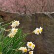 千里山は春です 3月13日(火)晴れ