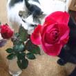 薔薇の手入れと猫たちと