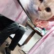 猫ちゃん ☆*.