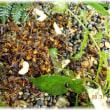 自分でスズメバチの巣を駆除