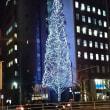 都心の生きたクリスマスツリー・・・ (浅草橋の菊星)